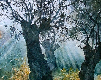 Early Morning In Olive Forest Hilandar Monastery Mount Athos (print)