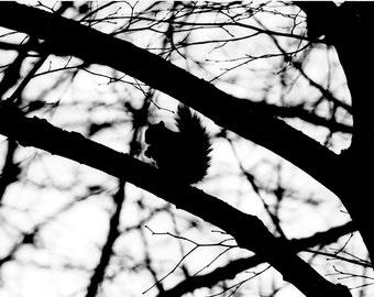 Photo print: Squirrel