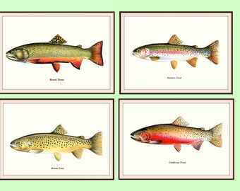 Trout Collection Prints, Brook Trout, Cutthroat Trout, Brown Trout, Rainbow Trout