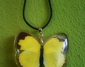Butterfly pendant necklace with adjustable koord  Real wings Hand made