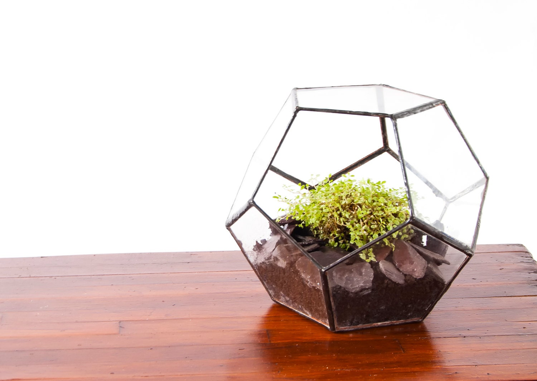 glass terrarium dodecahedron terrarium pentagonal. Black Bedroom Furniture Sets. Home Design Ideas