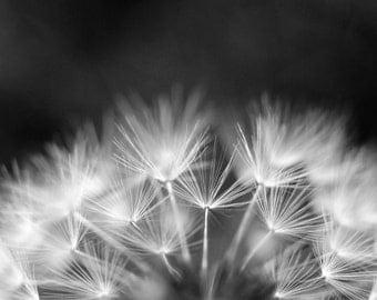 Black and White Photography - Home Decor - dandelion - sizes 4x6,5x7, 8x10,8x12,10x15, 11x14, 12x18, 16x20, 16x24 and 20x30