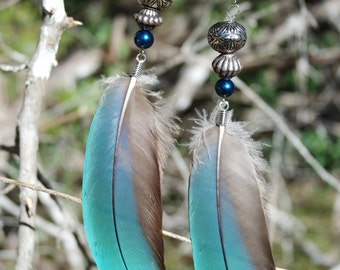 Blue Macaw Feather Earrings