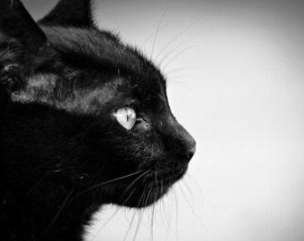 Black Cat Photo, Cat Print, Black and White Photography, Wall Art