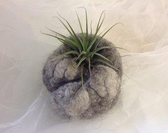 Felted seed pod with air plant