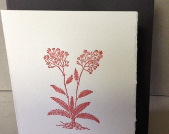 Meadowsweet Card