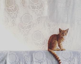 Ginger Kitten, White Curtain