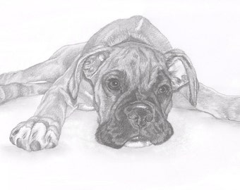 BOXER puppy dog Limited Edition art drawing print signed by UK artist