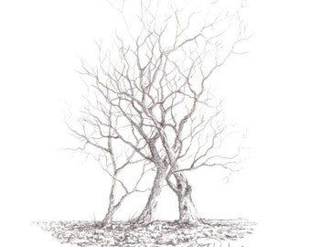 Unique work, drawing lead: Trio of trees #001