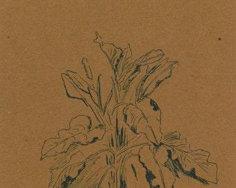 Plant Drawing - Cardboard