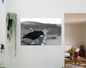 Raven. (Canvas Print Photography)