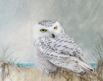 "SNOWY OWL-  A Digital print on streched Canvas measuring 17 1/2"" x 11""."