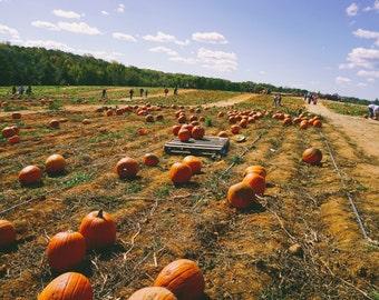 Fall, Autumn Photography - Pumpkin Patch
