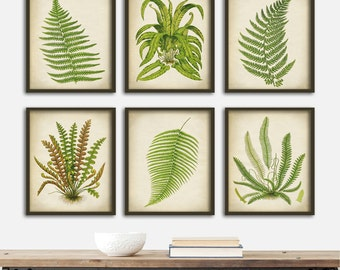 FERN BOTANICAL Print SET of 6 Art Fern Posters, Green Plants, Fern Print Set, Instant Collection Botanical Wall Decor, Ferns Decor, 8 x 10
