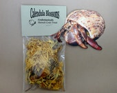 Hermit Crab Food Treat Calendula Blossoms by Crabotanicals all natural pet food