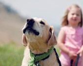 Dog Scarf, Hot Pink Scarf for Dog, Big Puppy Scarf, Dog Collar,  Fringed Dog Scarf, Dog Gift, Large Dog Crochet Scarf