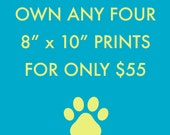 "Own any four 8"" x 10"" Wild Life Prints for a special price."
