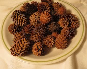 Northwoods Pine Cones 30 Various size pine cones