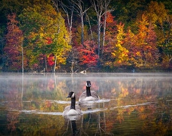 Two Canada Geese swimming on Hall Lake in Michigan during Autumn No. 054 A Fine Art Waterfowl Wildlife Photograph