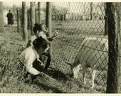 "Vintage Photo ""Making Friends"" Farm Animal Goat Snapshot Photo Old Antique Photo Black & White Photograph Found Photo Paper Ephemera - 179"