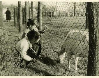 "Vintage Photo ""Making Friends"" Farm Animal Goat Snapshot Photo Old Antique Photo Black & White Photograph Found Photo Paper Ephemera - 179"