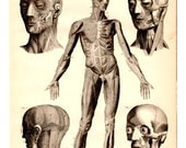 Anatomy The Human Body Antique Book Plate Print 1885 - Vintage Book Illustration Medical, Doctor Office Decor, Collage, Art, Craft Supplies