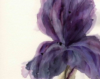 Modern Botanical Art Print,  Purple Iris, Large Archival Botanical Art