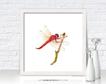RED DRAGONFLY Watercolor Art - Dragonfly Print, Dragonfly Greeting Cards, Dragonfly Painting, Dragonfly Wall Decor, Dragonfly Wall Art