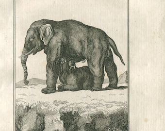 1808 Elephant Calf and Mother Breastfeeding Antique Print from Buffon,  Natural History Quadrupeds, Engraving by Bacquoy