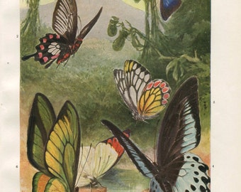 Tropical Butterflies 1920s Vintage Print Brehms Tierleben, Retro Decor