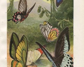 Tropical Butterflies 1920s Vintage Print Brehms Tierleben, Retro Decor