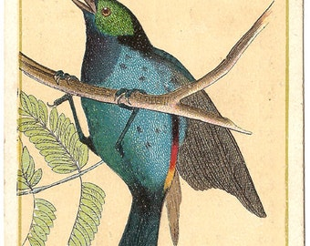 Pretty Blue Bird on Branch Antique French Chromolithograph Trade Card from Vintage Paper Attic