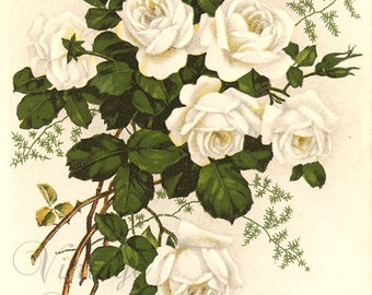 White Roses French Antique Postcard Chromolithograph Chromo Post Card from Vintage Paper Attic