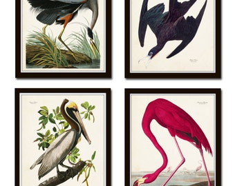 Vintage Audubon Sea Birds Print  Set No. 2, Giclee, Canvas Art, Bird Prints, Prints and Posters, Art Print, Coastal Art, Audubon Bird Prints