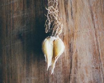 garlic photograph, kitchen wall art, garlic, still life, food photography, rustic, kitchen