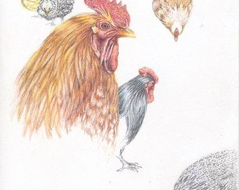 Rooster, chickens, 9x12 colored pencil drawing, kitchen decor, home decor, home and living, art & collectibles, earthspalette