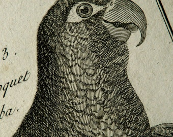 1789 Antique print of PARROTS. Cockatoos. Lories. Lorikeets. Tropical birds. Ornithology. Encyclopédie Engraving. 228 years old engraving