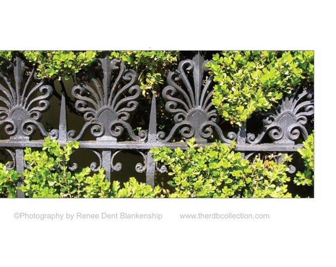 Ironwork in the Hedge Note Cards