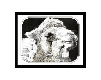 Camel Pen and Ink Print