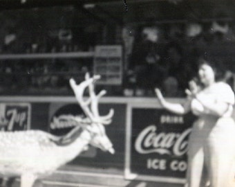 Vintage Photo..Danger Deer 1950's, Original Photo, Old Photo Snapshot, Vernacular Photography, American Social History Photo