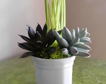 Tiny succulent, Small Succulent Arrangement, Faux Plant, Tiny Plant, Fake Plants, Succulents, Small Plant, Succulent in White Square Vase