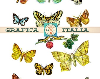 BUTTERFLY Collage Sheet - 13 Beautiful VINTAGE Butterflies Digital Download Printable Clipart Graphic Design Elements Images 002