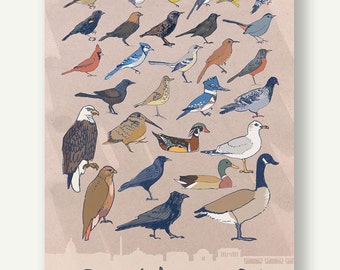 Birds of Washington DC - print postcard birdwatching illustration drawing color nature cute wildlife migration poster eagle sparrow crow fly