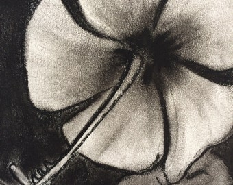 Amapola Flower Charcoal Drawing Small Original Flower Drawing