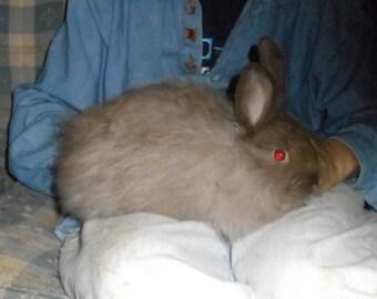 French Angora Rabbit Fiber 1 oz Chocolate, brown