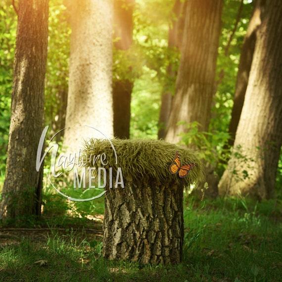 Newborn Baby Toddler Child Grass Forest Bed Tree Stump