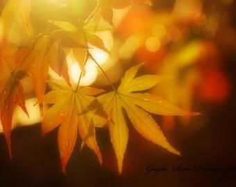 Japanese Maple Photography,Leaf Photography,Nature Photography,Fall Photography,Autumn Photography,Orange Leaves,Woodland,Forest,Botanical