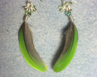 Lime green parrot feather earrings adorned with dangling green Chinese crystal beads