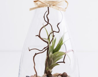 Terrarium with plant