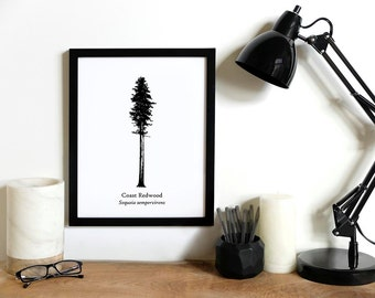 Coast Redwood Tree Illustration | Rustic Wall Decor | Tall Tree Print
